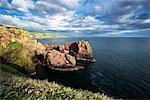 St Abbs Head, Scottish Borders, Ecosse