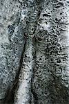 Écorce des arbres, extrême-close up