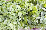 Tunisie, Tozeur, marché central, des feuilles de menthe
