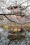 Japon, Tokyo, parc d'Ueno, pagode et sherry en fleurs