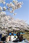 Pique-nique de quartier, Parc Kitanomaru, Japon, Tokyo, Chiyoda-Ku
