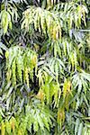 Indonesia, Bali, plant