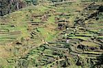 Portugal, Madeira, Serra de Agua, terrasse culture