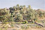 Egypt, Libyan desert, Siwa Oasis, plantations