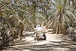 Egypt, Libyan desert, Siwa Oasis, cart