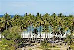 Indonesia, Sulawesi, Bira Beach, palm trees