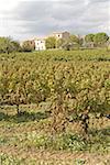 Vignoble de France, Provence, Luberon
