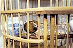 China, Hong Kong, Kowloon, bird market