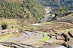 Chine, Yunnan, entre Lancang et Shuangliang, rizières