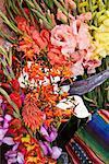 Fleurs fraîches au marché, Guatemala
