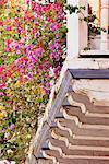 Bougainvillea Plants on Balcony