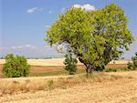 France, Provence, Valensole Plateau, country landscape