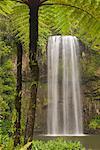 Millaa Millaa Falls, plateau d'Atherton, Queensland, Australie