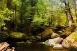 Flux à Yarra varie National Park, Victoria, Australie
