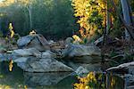 Parc National de Carnarvon Creek, gorges de Carnarvon, Carnarvon, Queensland, Australie
