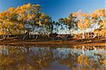 Billabong dans le Parc National de West MacDonnel, territoire du Nord Australie