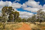 Chemin de terre dans l'Outback australien, Queensland, Australie