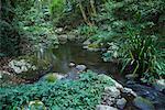 Brindle Creek, Parc National de Border Ranges, New South Wales, Australie
