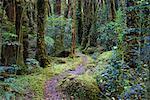 Chemin à travers la forêt tropicale, South Island, Nouvelle-Zélande