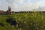 Windmill in Field, Norfolk, England