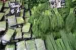 Tas de légumes verts et herbes au marché fermier