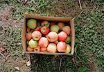 Box of organic apples