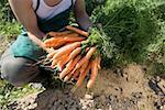 Travailleur agricole tenant fraîchement cueillies botte de carottes