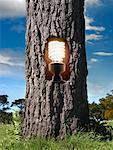 Compact Flourescent Light Bulb inside Tree Trunk