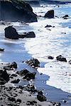Coastal Region, California, USA