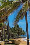 Catamaran ligoté avec palmiers sur la plage, plage Luquillo, Puerto Rico