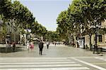 Trees along the road, Barcelona, Spain