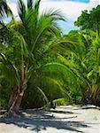 Palmen am Strand, South West Bay, Providencia, Providencia y Santa Catalina, San Andrés y Providencia Abteilung,