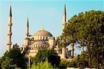 Arbres près d'une mosquée, la mosquée bleue, Istanbul, Turquie