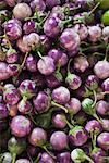 Purple Thai Kermit Eggplants