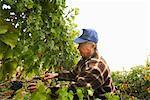 Farmer in Vineyard