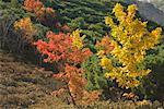 Trees in Autumn, Akan National Park, Hokkaido, Japan