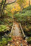 Promenade en forêt, Hokkaido, Japon