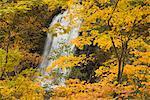 Chutes d'eau, Hokkaido, Japon