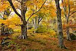 Glen Lyon in Autumn, Argyll and Bute, Scotland