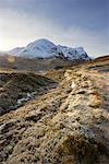 Frost bedeckten Heather und Berge, Glencoe, Schottland
