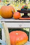 Courges et citrouilles sur table de jardin et chaise (en plein air)