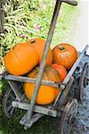 Orange pumpkins in a wooden cart (out of doors)