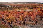 La Rioja im Herbst, Spanien