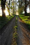 Path Through Forest, Mecklenburg-Western Pomerania, Germany