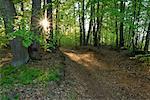 Forest in Mecklenburg-Western Pomerania, Germany