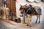 Donkey in the Medina of Fez, Morocco