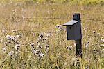 Cabane d'oiseaux sur piquet, Kananaskis Country, Alberta, Canada