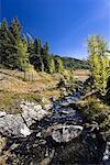 Ruisseau et arbres de mélèze laricin, le Parc National Banff, Alberta