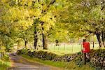 Case postale rouge par Country Lane, Cumbria, Lake District, Angleterre