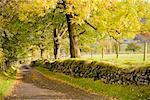 Bordée d'arbres Country Lane, Cumbria, Lake District, Angleterre
